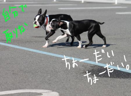ponzu45+365_edited-1_convert_20090920140033.jpg