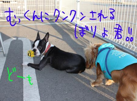 ponzu45+624_edited-1_convert_20090922094211.jpg