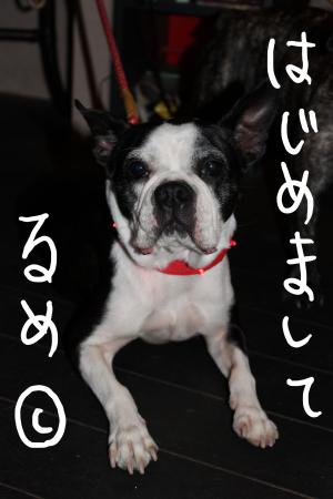 ponzu46+014_edited-1_convert_20090922122008.jpg