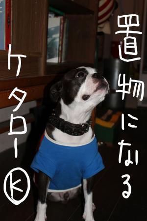 ponzu46+022_edited-1_convert_20090922122314.jpg