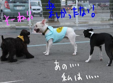 ponzu49+121_edited-1_convert_20090928195727.jpg