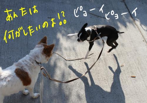 ponzu50+016_edited-1_convert_20091019203441.jpg