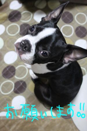ponzu55+019_edited-1_convert_20091009212317.jpg