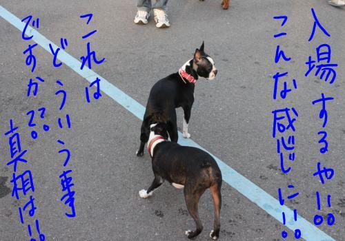 ponzu57+146_edited-1_convert_20091015203328.jpg