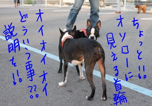 ponzu57+148_edited-1_convert_20091015203709.jpg