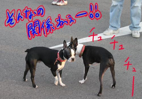 ponzu57+152_edited-1_convert_20091015204028.jpg