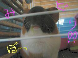 小松菜食べた証明。