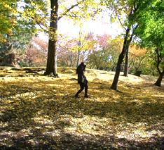 Autumncolor_20091117012703.jpg