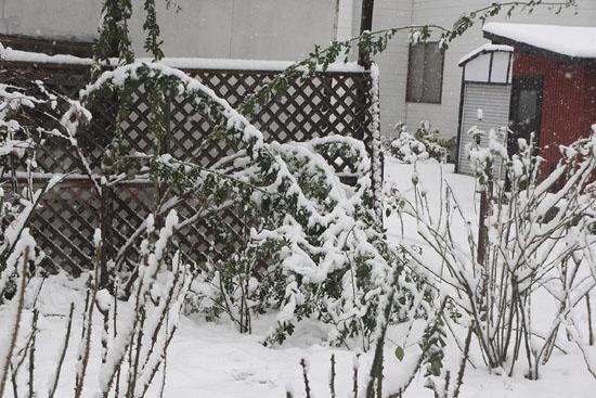 09初雪01