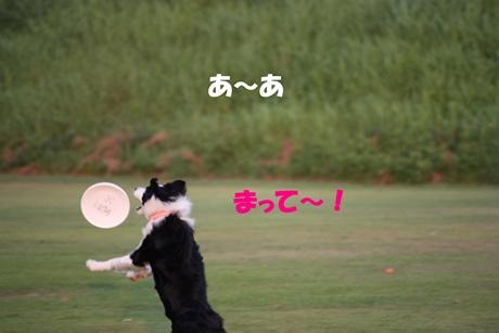 20090830Disk5.jpg