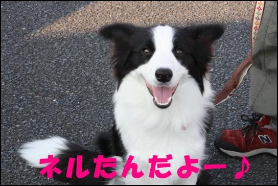 木曽三川10.35j