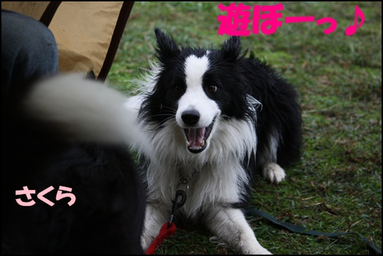 木曽三川11.1こ