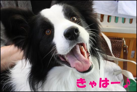 木曽三川11.1か