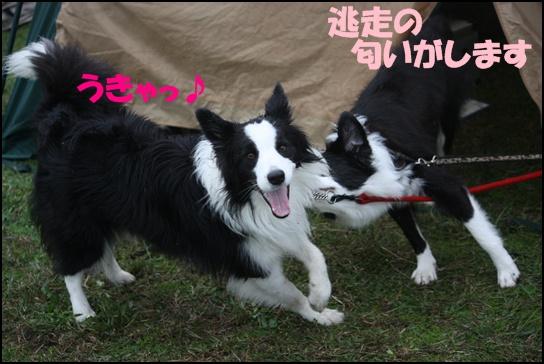 木曽三川11.1せ