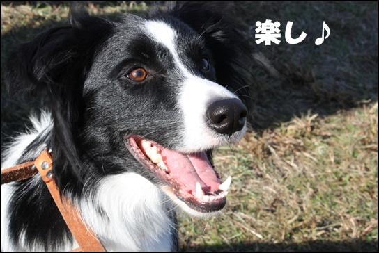 木曽三川11.3e