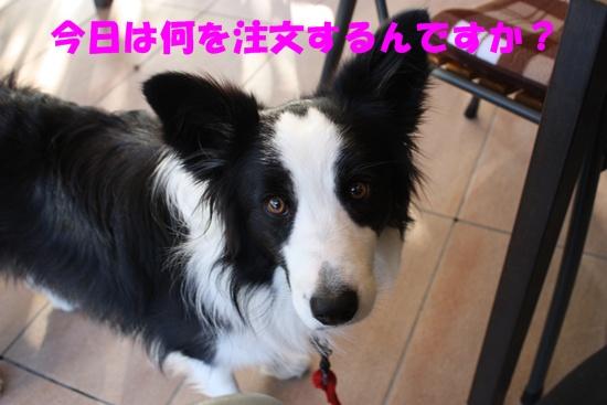 Cafe091114-2.jpg