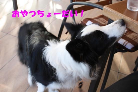 Cafe091114-4.jpg