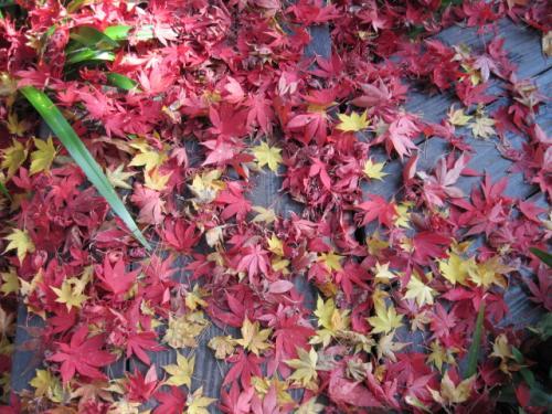 地面に落ちた枯葉も美しい