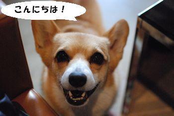 ビビの笑顔1 こんにちは