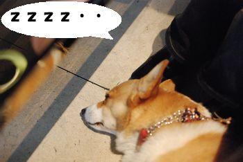 ビビ 寝てる