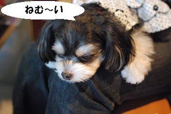 ラム 眠い