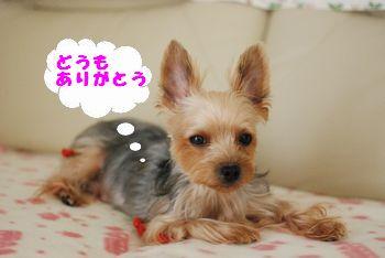 20091220133825673.jpg