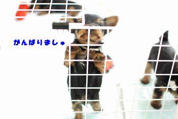 20100115120341dd5.jpg