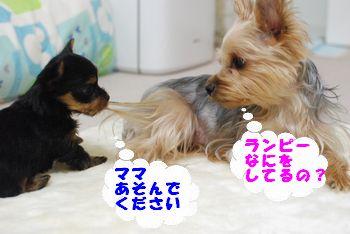 201001201114406fa.jpg