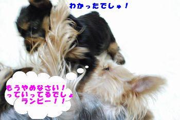 20100120114159b23.jpg