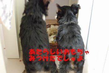 20100125211005937.jpg