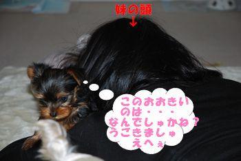 20100127114204697.jpg