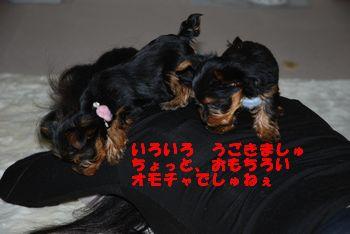 20100127114541d54.jpg