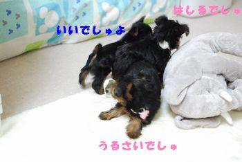 20100127114818a8c.jpg