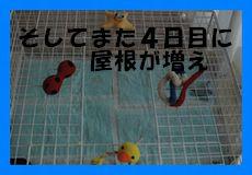 201002021520484f8.jpg