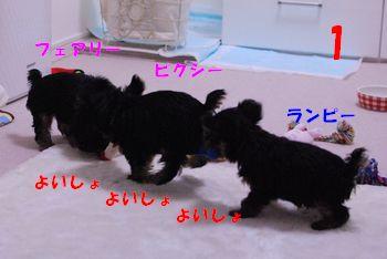 20100204134959007.jpg