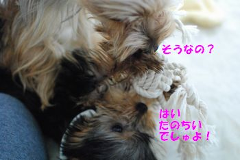 201002272026519cf.jpg