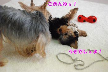 20100302121946ab8.jpg