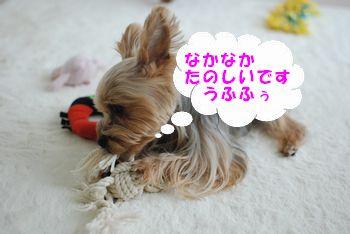 20100309141006ab5.jpg