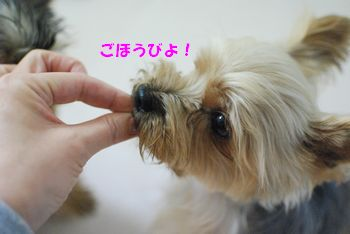 20100311103245aed.jpg
