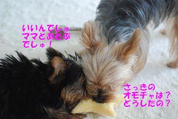 2010031209113051b.jpg