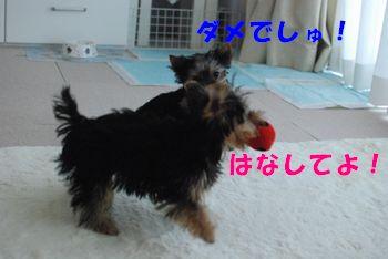 20100324154633870.jpg