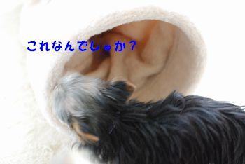 201004181048396d8.jpg