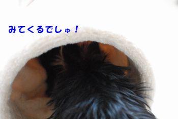 2010041811273944c.jpg