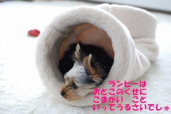 20100420114848468.jpg