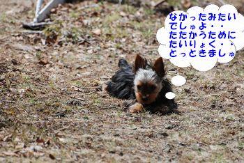 20100502154619d2b.jpg