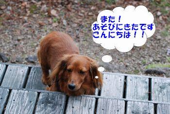 20100507171138c59.jpg
