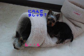201005141137046eb.jpg