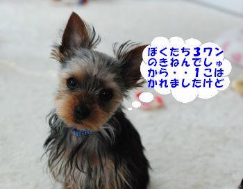 20100516172540b32.jpg