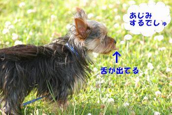 20100519130436ffc.jpg