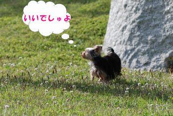 20100520130203f98.jpg